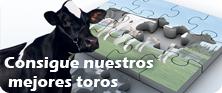 Catalogo de toros